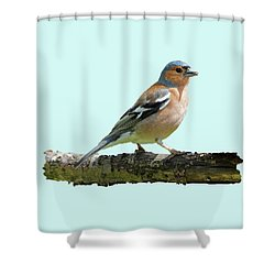Male Chaffinch, Blue Background Shower Curtain
