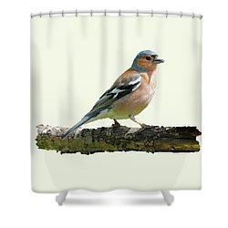 Male Chaffinch, Cream Background Shower Curtain