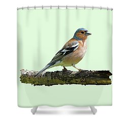 Male Chaffinch, Green Background Shower Curtain