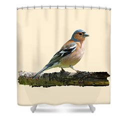 Male Chaffinch, Transparent Background Shower Curtain