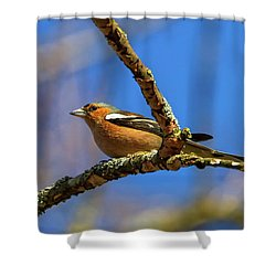 Male Common Chaffinch Bird, Fringilla Coelebs Shower Curtain