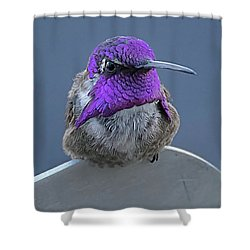 Male Costas Hummingbird On Sign  Shower Curtain by Anne Rodkin