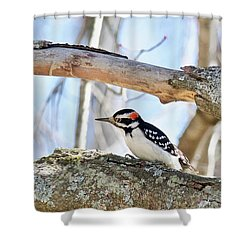 Shower Curtain featuring the photograph Male Downey Woodpecker 1112 by Michael Peychich