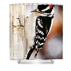Male Downy Woodpecker 3 Shower Curtain by Larry Ricker