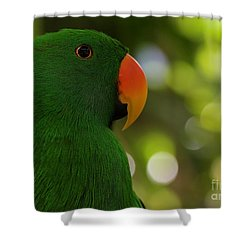 Male Eclectus Parrot Shower Curtain
