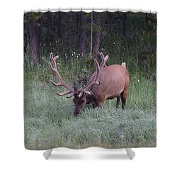 Bull Elk Rocky Mountain Np Co Shower Curtain