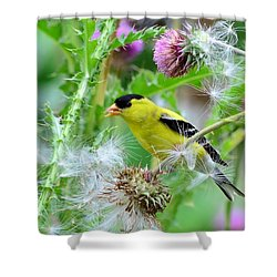 Male Goldfinch Shower Curtain
