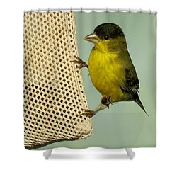 Male Goldfinch On Sock Feeder Shower Curtain