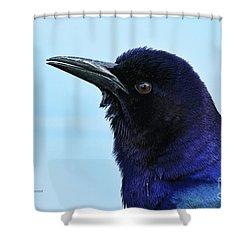 Shower Curtain featuring the photograph Male Grackle Beauty by Deborah Benoit