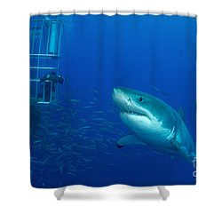 Male Great White Shark And Divers Shower Curtain by Todd Winner