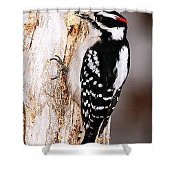 Male Hairy Woodpecker Shower Curtain by Larry Ricker