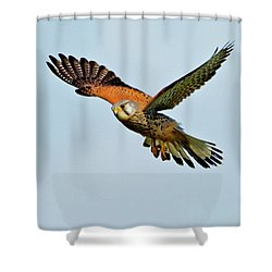 Male Kestrel In The Wind. Shower Curtain by Paul Scoullar