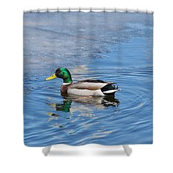 Shower Curtain featuring the photograph Male Mallard Duck by Michael Peychich