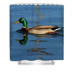 Male Mallard Or Wild Duck, Anas Platyrhynchos, Portrait Shower Curtain