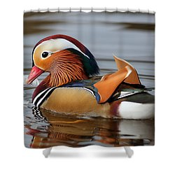 Shower Curtain featuring the photograph Male Mandarin Duck by Grant Glendinning