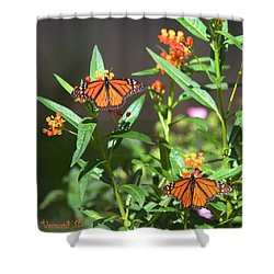 Male Monarch Butterflies Shower Curtain