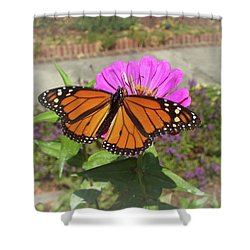 Male Monarch  Shower Curtain