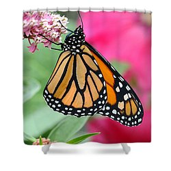 Shower Curtain featuring the photograph Male Monarch by Steve Augustin