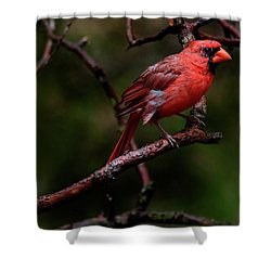 Male Northern Cardinal Shower Curtain