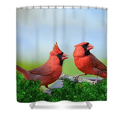 Male Northern Cardinals In Spring Shower Curtain by Bonnie Barry