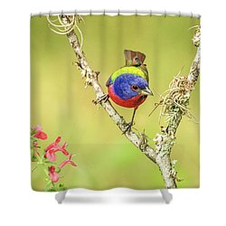 Male Painted Bunting #2 Shower Curtain