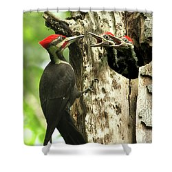 Male Pileated Woodpecker At Nest Shower Curtain by Mircea Costina Photography