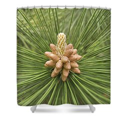 Male Pine Cones  Shower Curtain by Michael Peychich