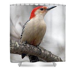 Male Red-bellied Woodpecker Shower Curtain