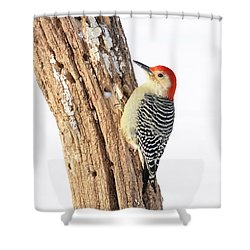 Shower Curtain featuring the photograph Male Red-bellied Woodpecker by Paul Miller
