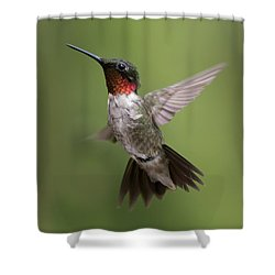 Male Ruby Throated Hummingbird Shower Curtain by David Lester