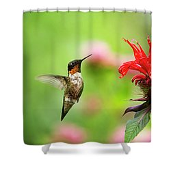 Male Ruby-throated Hummingbird Hovering Near Flowers Shower Curtain