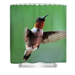 Male Ruby-throated Hummingbird Shower Curtain