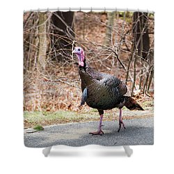 Male Turkey On A Walk Shower Curtain