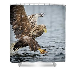Male White-tailed Eagle Shower Curtain