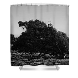 Shower Curtain featuring the photograph Malformed Treeline by Clayton Bruster