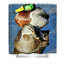 Mallard Couple Shower Curtain