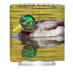 Mallard Drake On Golden Pond Shower Curtain