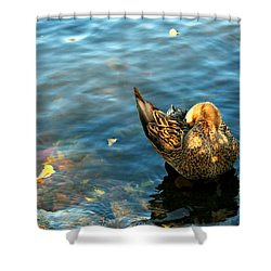 Mallard Duck In The Fox River Shower Curtain