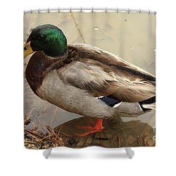 Shower Curtain featuring the photograph Mallard Duck by Kim Henderson