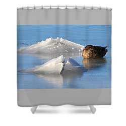 Mallard Duck Mount Sinai New York Shower Curtain by Bob Savage
