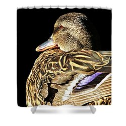 Mallard Duck Portrait Shower Curtain