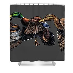 Mallard Ducks In Flight Shower Curtain