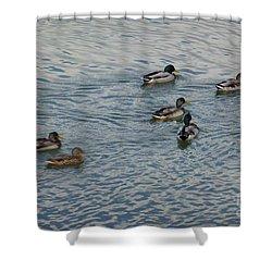 Mallard Ducks In Pond 2 Shower Curtain by Jean Bernard Roussilhe