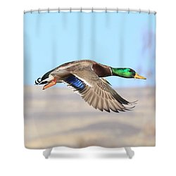 Mallard Flying Over Shower Curtain by Lynn Hopwood