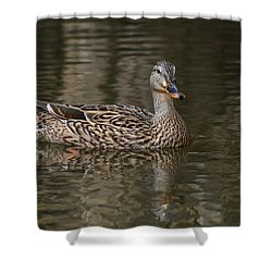 Mallard Hen Shower Curtain by Elaine Malott