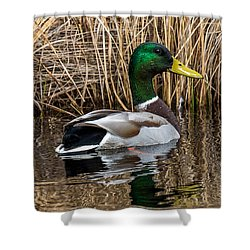 Mallard II Shower Curtain