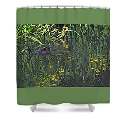 Mallard In The Marsh Shower Curtain by Suzy Piatt