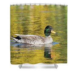 Mallard In Yellow Shower Curtain