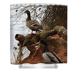 Shower Curtain featuring the photograph Mallard by Kim Henderson