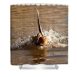 Mallard Mating Dance Shower Curtain